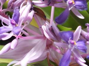 Silverton Tulips 020